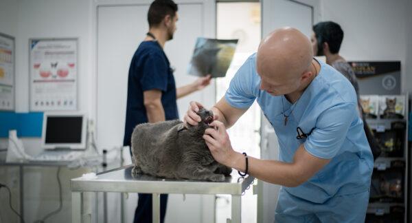 Pet Clinic Ruma